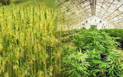 Hemp vs. Marijuana: Are Hemp and Marijuana the Same?