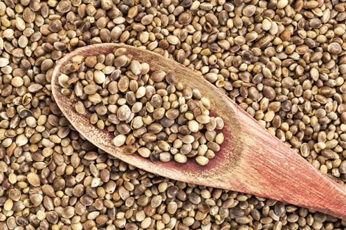20 benefits of Hemp seeds and importance in our life