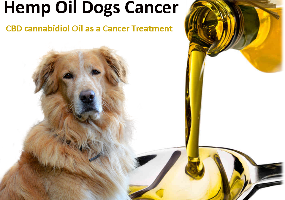 Hemp Oil Dogs Cancer